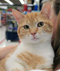 Peaches says: Please adopt me from The CatWorks